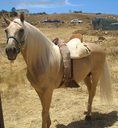 20110204185344-caballodorado.jpg