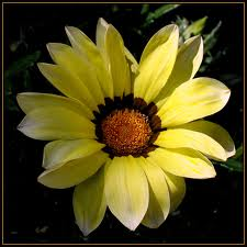 20110213094708-flor.jpg