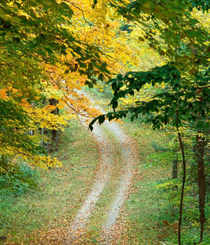 20110331141148-imagenes-otono-naturaleza-p.jpg