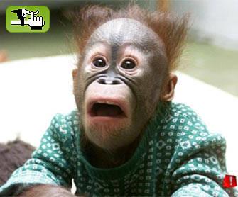 20110203211036-1127164392-chimp.jpg