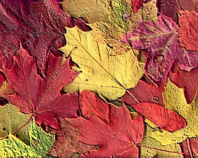 20110212185701-hojas.jpg