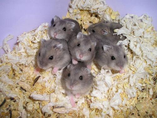20120331150054-hamster.jpg
